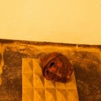 Helmet (Acid) 2014, Restless Artefact 2014